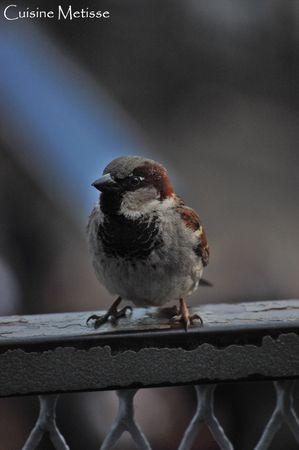 BirdEllisIsland