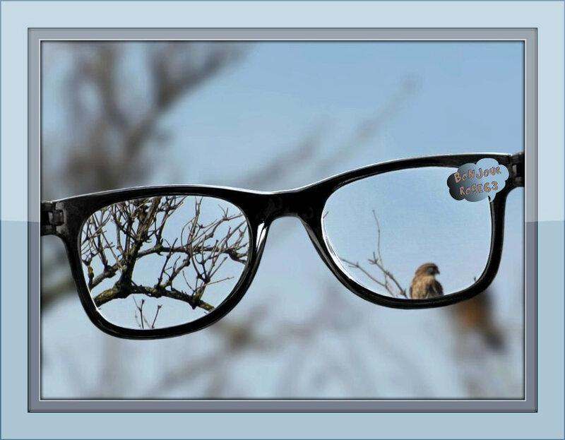 Rose63 l'oiseau se mire dans mes lunette