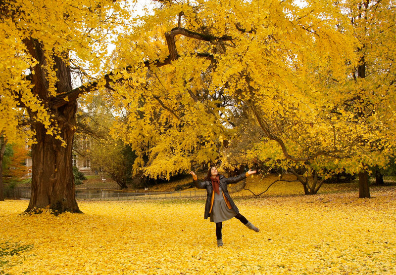 ginkgos 01