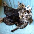 2009 09 10 Les chatons sans leur propre mère