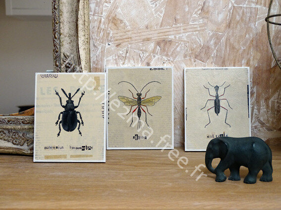 insectes02