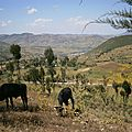 montagnes du Harerge