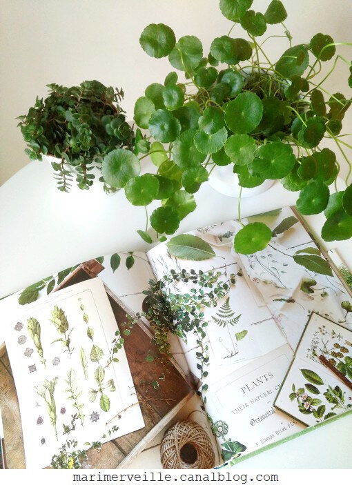 Botanical style - selina Lake - blog marimerveille12