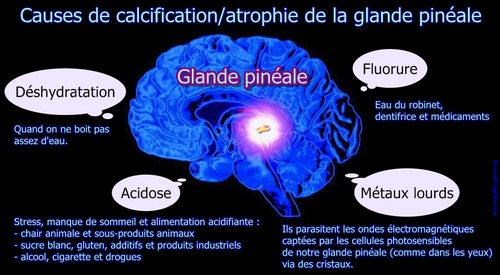 calcification glande pineale