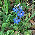 Fleurs de Leon 24061623