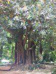 j2_parc_arbre