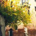 Frondaisons d'automne