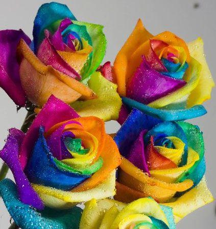 roses_450x479