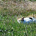 Feuilles, fleurs et chats 101016
