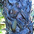 Palmier dans le parc Olbius-Riquier à Hyères