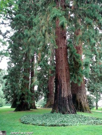 Sequoias_tours