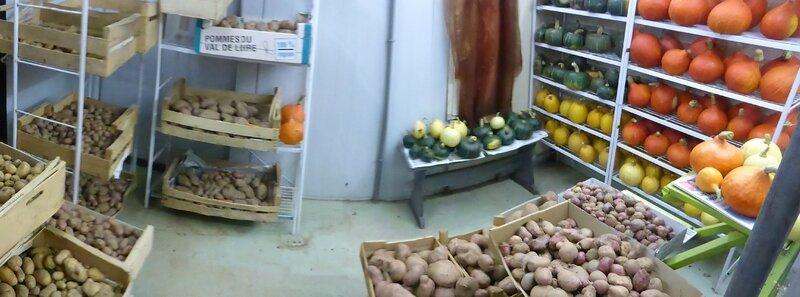 11-courges-pommes de terre (1)