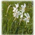 Narcisse des poëtes