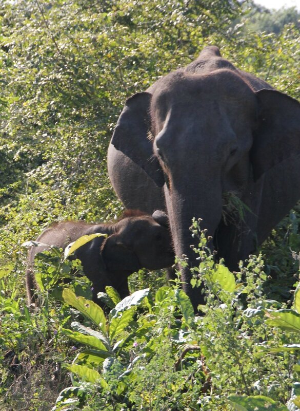 2015-02 Sri Lanka 0708_DxO