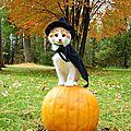 Halloween kekcékça?