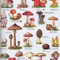 A la rencontre des champignons