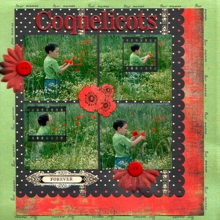 coquelicots_forever