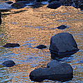 Gold river (2)