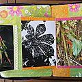 Pérou -7- page flore Amazonie ouverte