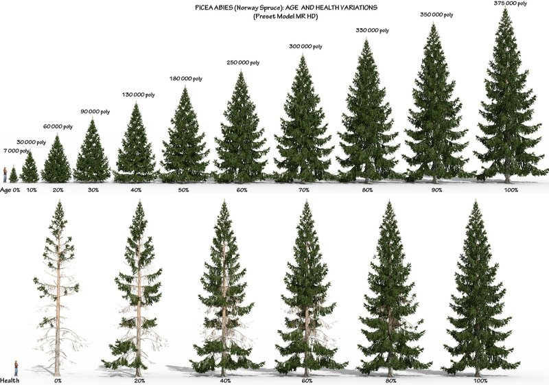 06 Picea abies Norway spruce fir tree 3d plant model factory 3ds cad max fbx obj Age Health