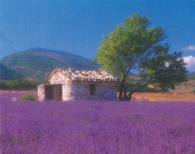 provence_pic