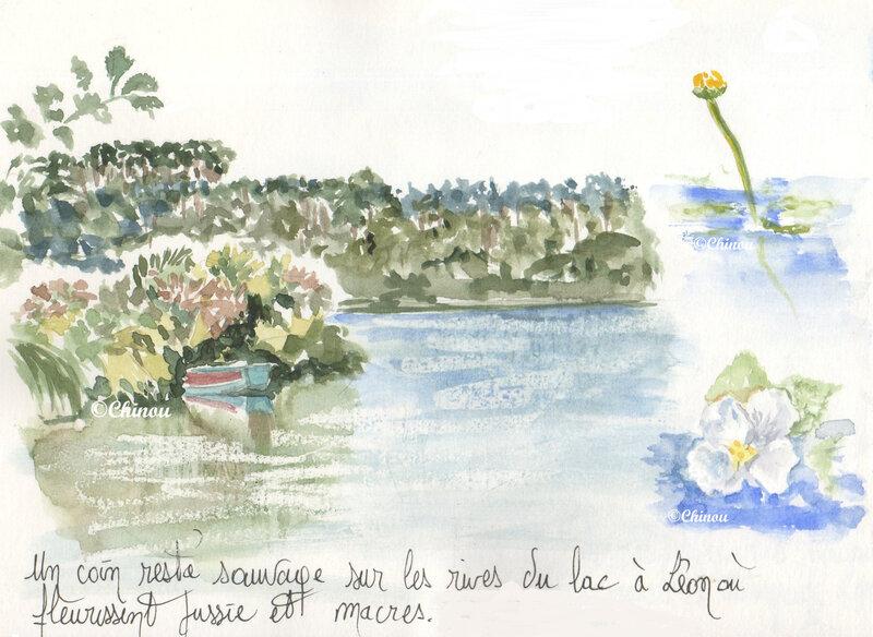 Lac de Léon fleuri