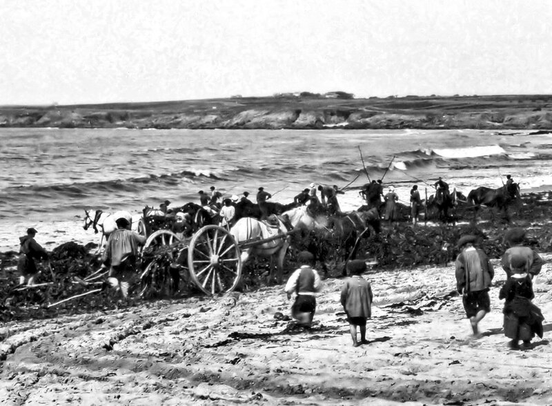 Ch37 - Ramassage du goémon au Trez Goarem à St Tugen vers 1900a