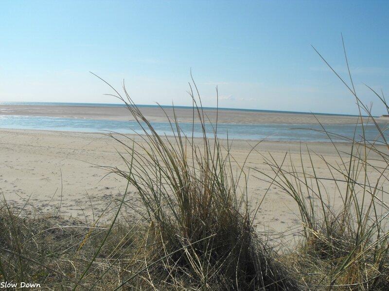 Les herbes de la dune