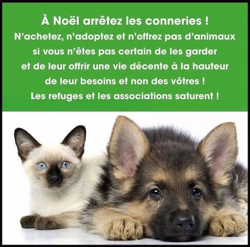 animaux de compagnie noel