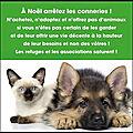 Texte à méditer - les animaux ne doivent pas être des cadeaux que l'on abandonne quand noël est passé !