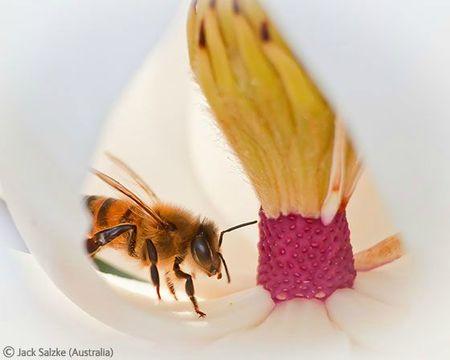 WPY bee on flower