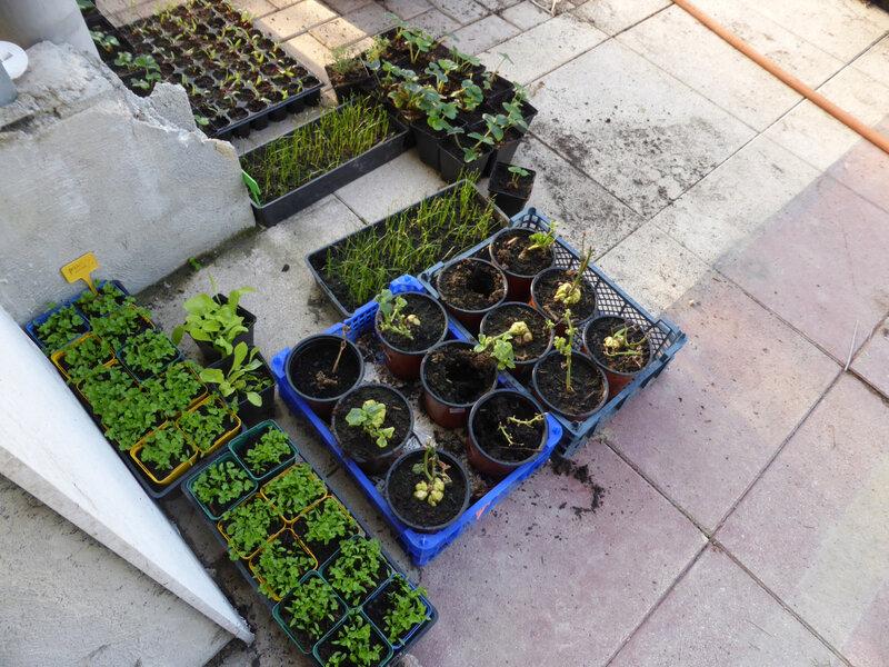 28-serre, plants (1)