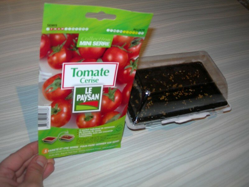 tomate6