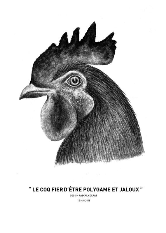 __le_coq_fie_re_d_e_tre_polygame_et_jaloux__