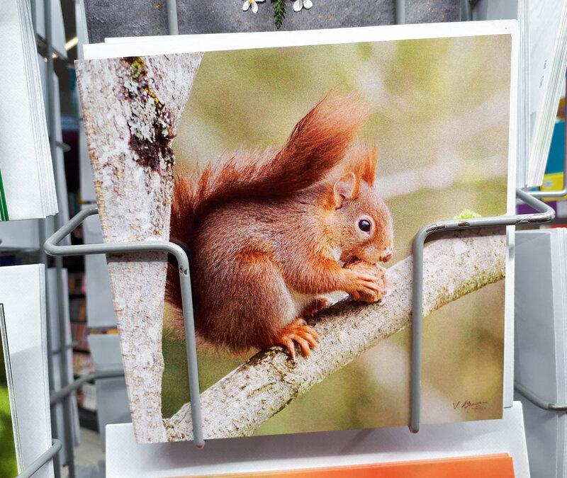 écureuil-noix01