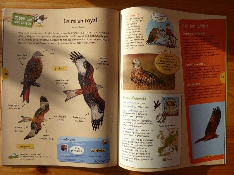 L'oiseau mag hiver 16 (3)