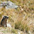012 Marmotte