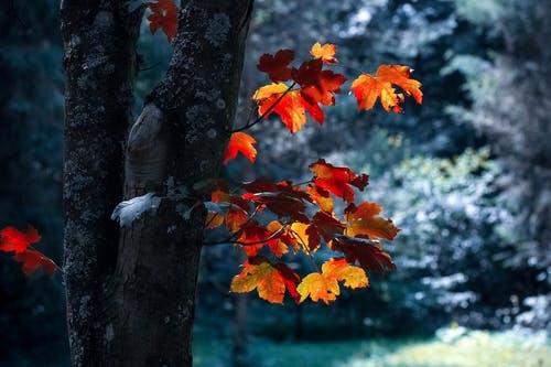 automne_14