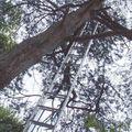 Parc-des-platanes-Pins6