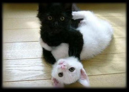 black_white_cat2