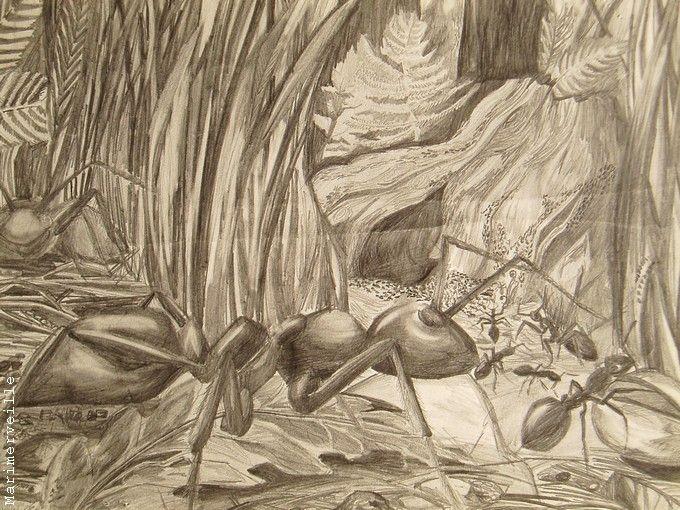 La fourmilière (crayon HB)