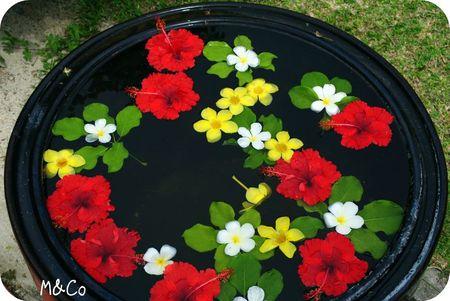 thai-fleurs