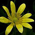 jaune (16)