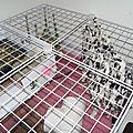 La cage!