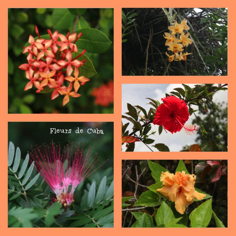 Végétation cubaine