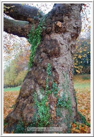 l_arbre___l_entr_e