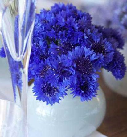 bleu&