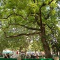 10 Jolis arbres dans le Parc
