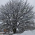 encore un arbre du quartier