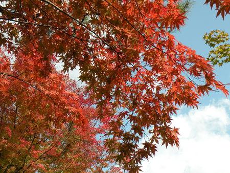 Japon_Kyoto_2009_2079